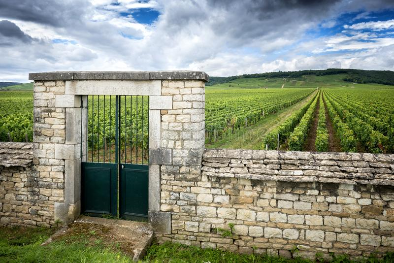 Burgundy, Cote d`Or. Vineyard with fence stone wall and access gate. stock image