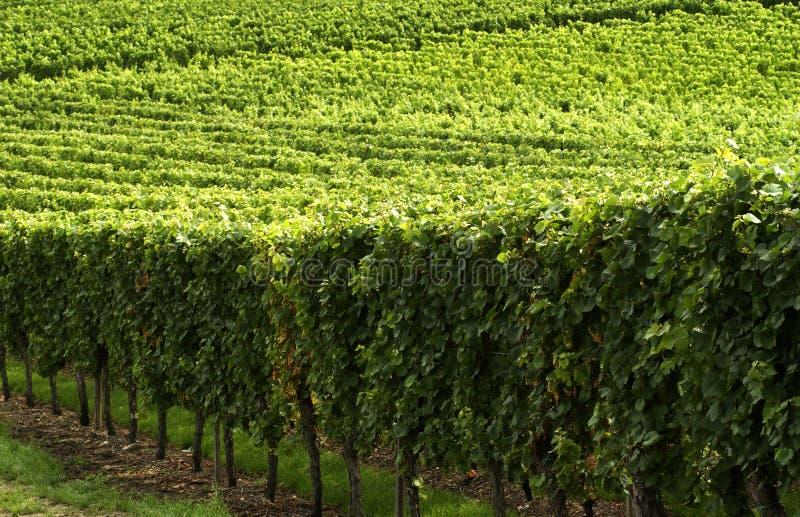 burgundy france vingård royaltyfri fotografi