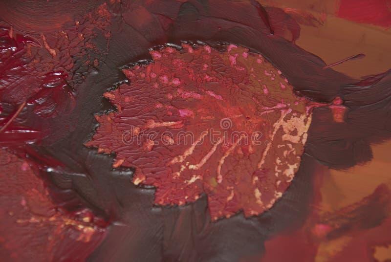 Burgundy, jesień liść zdjęcia royalty free