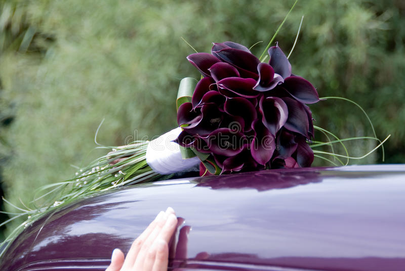 burgundy kalii lillies obraz stock