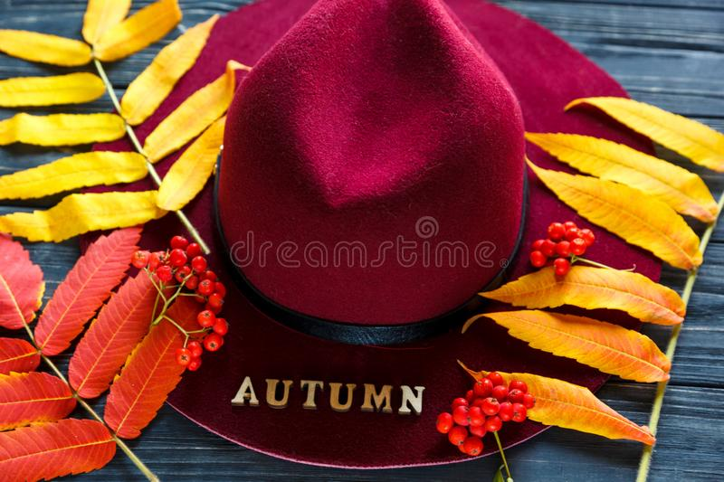 Burgundy or marsala color hat on a gray wooden background with autumn yellow, red leaves and berries. Flat lay. Copyspace stock photography