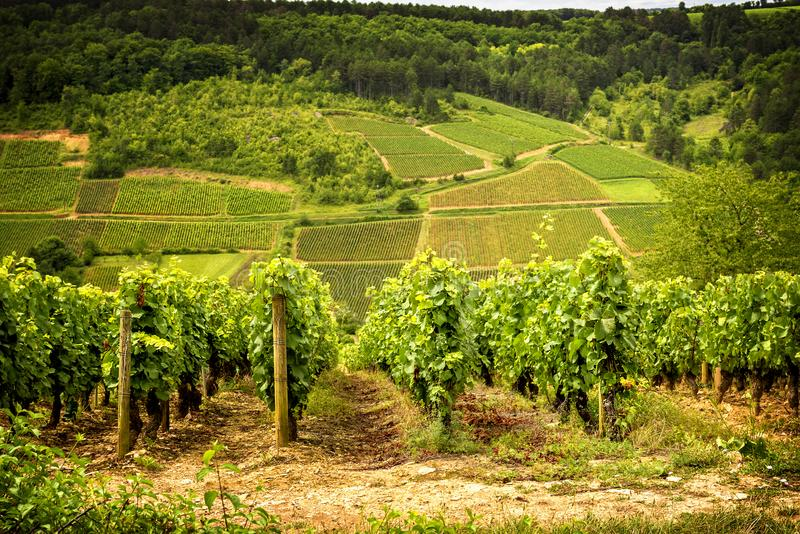 Hills covered with vineyards in the wine region of Burgundy, France. Burgundy, a panoramic road that crosses the wine region and makes us know the major stock photos