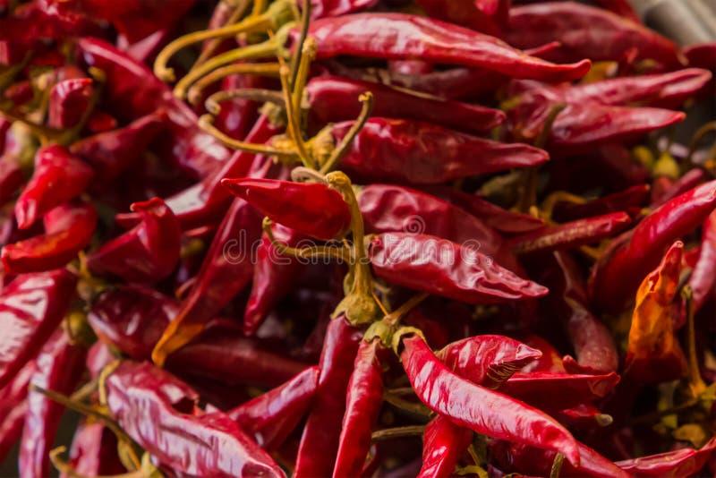 Burgundy red background dry pods chili sharp sauce base traditional seasoning asia india lot fruit base design backdrop stock photo