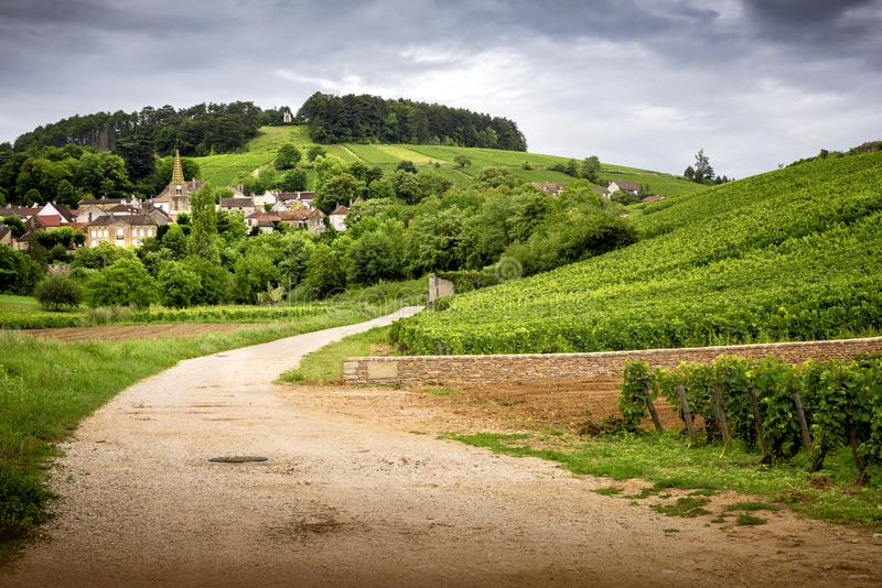 Burgundy. Road in the vineyards leading to the village of Pernand-Vergelesses in Côte de Beaune. France stock images