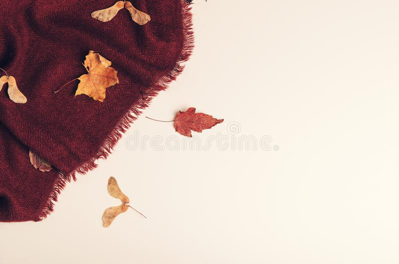 Burgundy warm cozy blanket with dry maple leaves on white background. Winter clothes, interior. Tonned photo. Copy space. Burgundy warm cozy blanket with dry stock photo