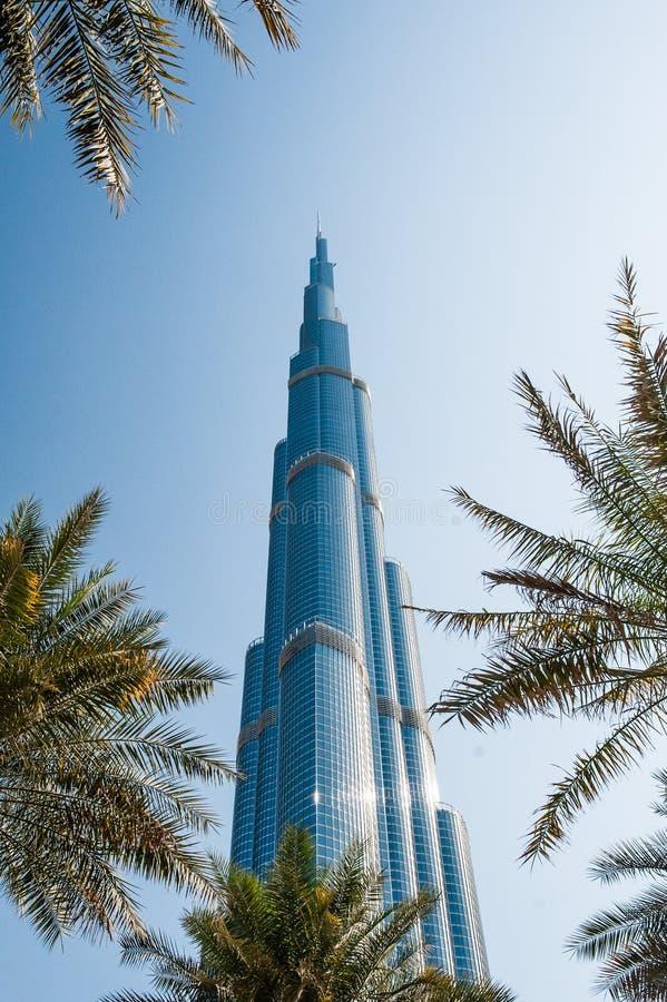 Burj Khalifa tower in Dubai. Skyscraper in the modern city. Palm trees. royalty free stock photos