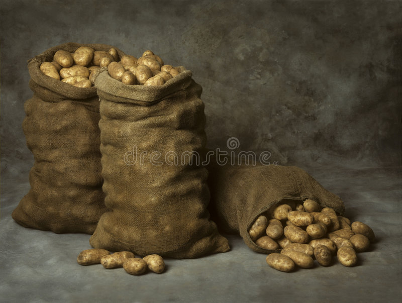 Burlap Sacks of Potatoes. Three burlap sacks of potatoes on a canvas background royalty free stock photo