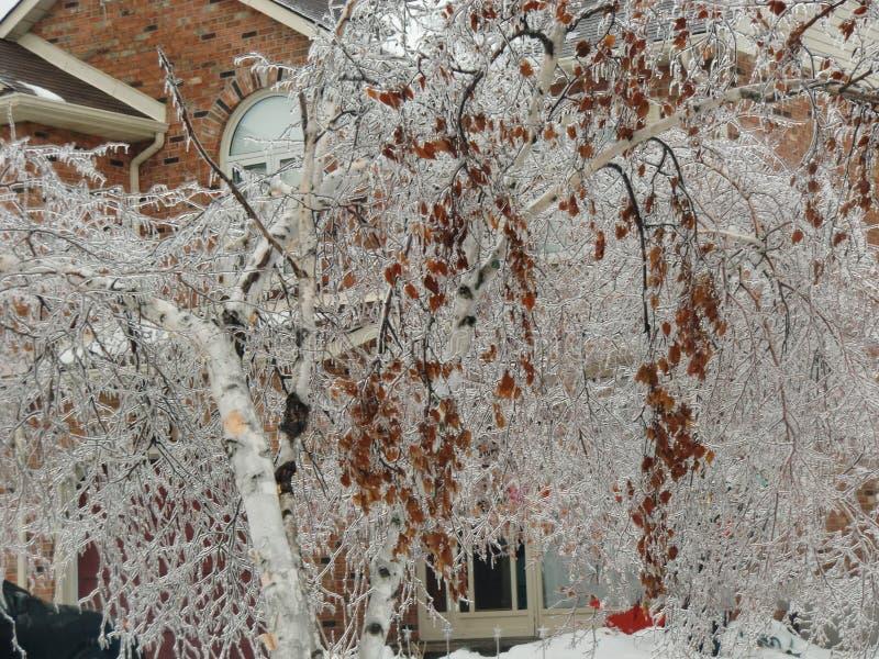 Burlington Ontario Canada in de Winter stock fotografie