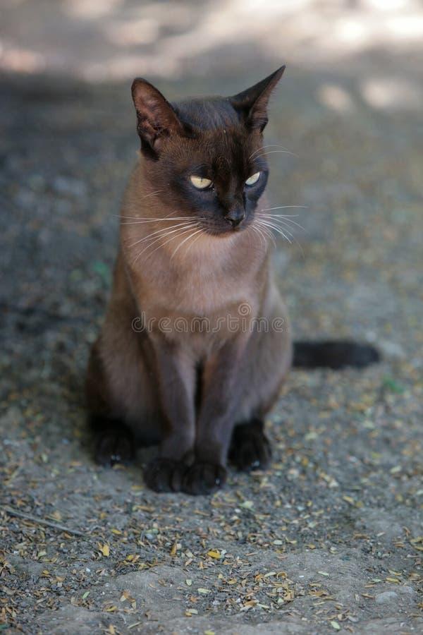 Burma cat. S nursery on the Inlay Lake in Myanmar royalty free stock photos