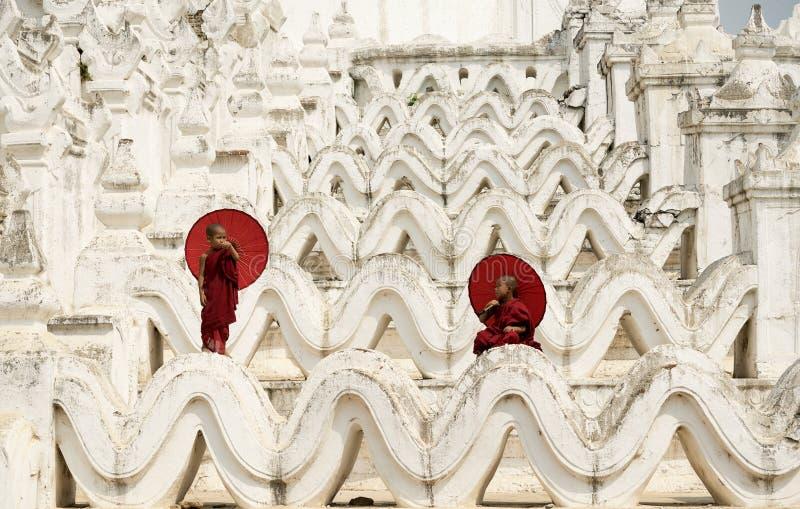 Burma novismunken royaltyfri foto