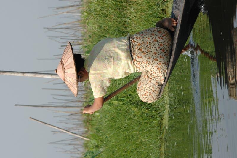Burman Frau auf Inle See lizenzfreie stockfotos