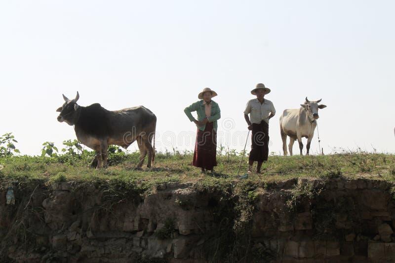 Burmese åldringpar med deras cettle arkivfoton