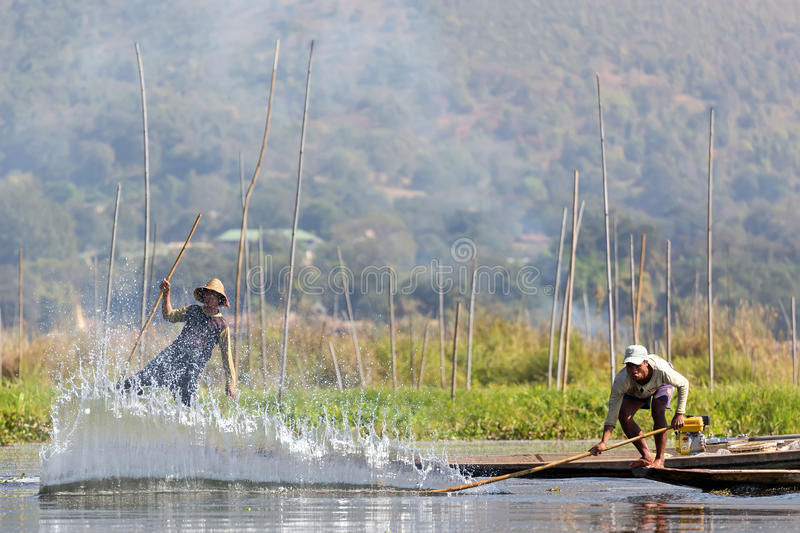 Burmese fishing technique. INLE LAKE, MYANMAR, JANUARY 26, 2015 : A Burmese fisherman is splashing the water surface to make the fishes entering the net stock image