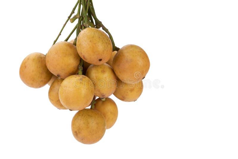 Burmese grape - Mafai in Thai Baccaurea ramiflora Lour. Burmese grape - Mafai in Thai, sweet and sour fruit scientific name is Baccaurea ramiflora Lour isolated royalty free stock image