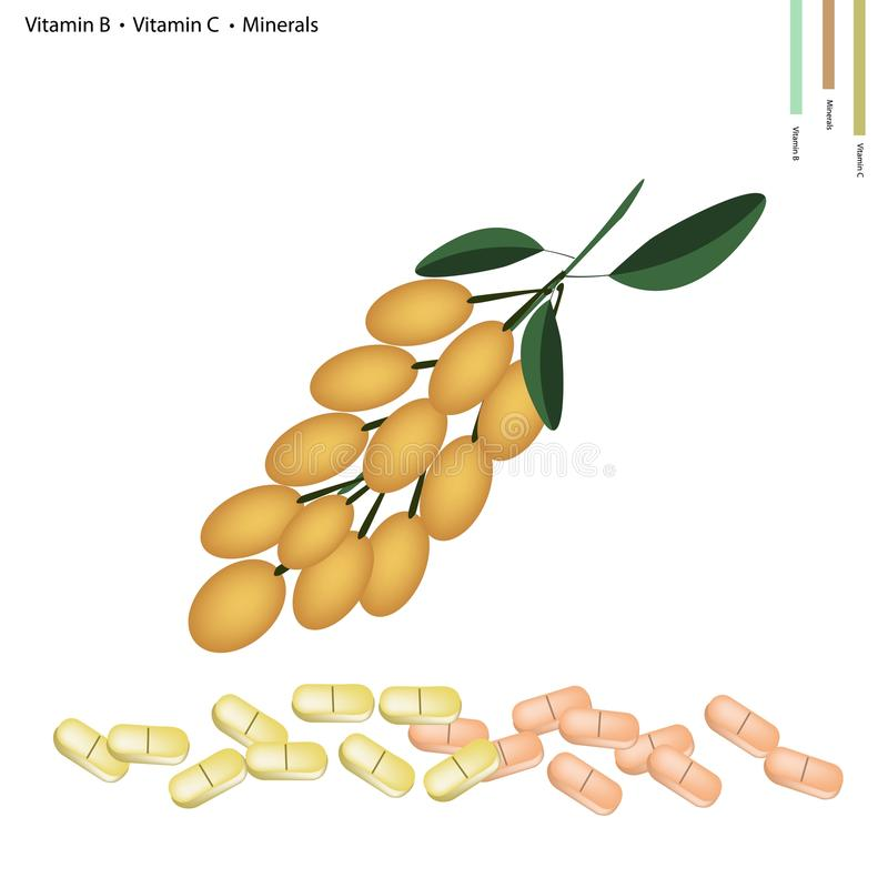 Burmese Grape with Vitamin B, C and Minerals. Healthcare Concept, Illustration of Burmese Grape with Vitamin B and Vitamin C and Minerals Tablet, Essential royalty free illustration