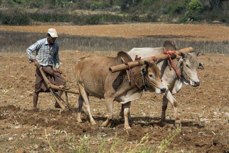 Burmese jordbruk - Myanmar royaltyfri bild