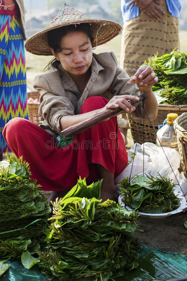 Burmese lady at the market, Myanmar. Mrauk U, Myanmar - January 30, 2016. An unidentified Burmese woman weighs out the betel leaf, the leaf is chewed as its a stock photos