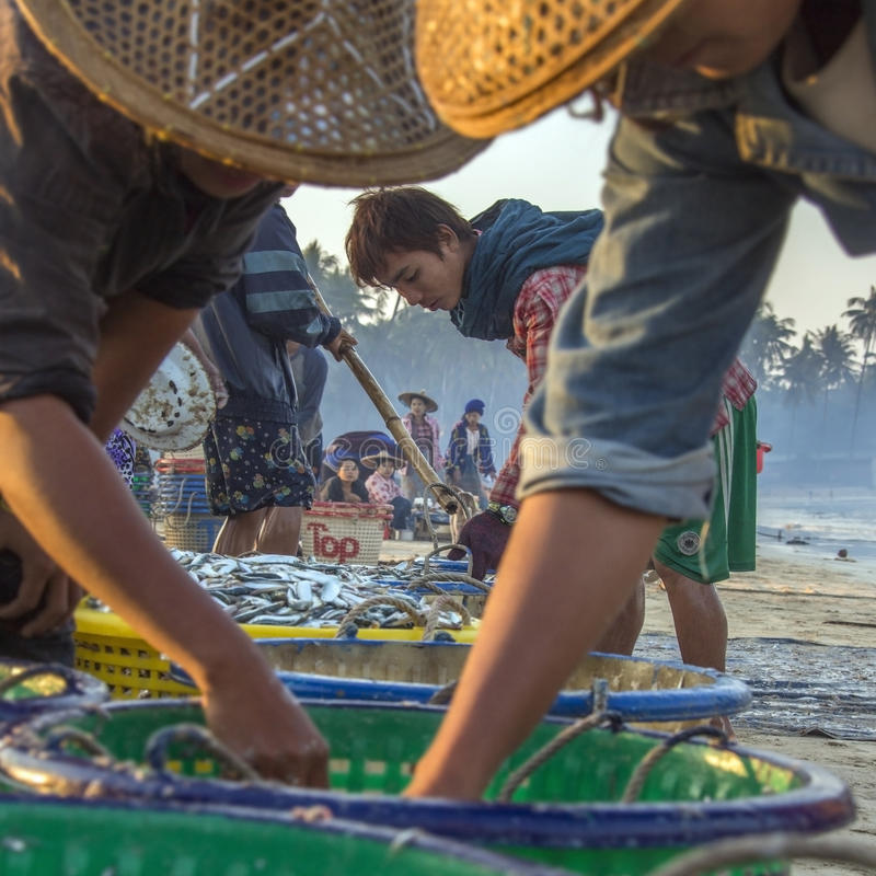 Fishing Village - Ngapali Beach - Myanmar (Burma). Burmese people sorting the nights catch on the beach at dawn, near the fishing village on Ngapali Beach in stock images