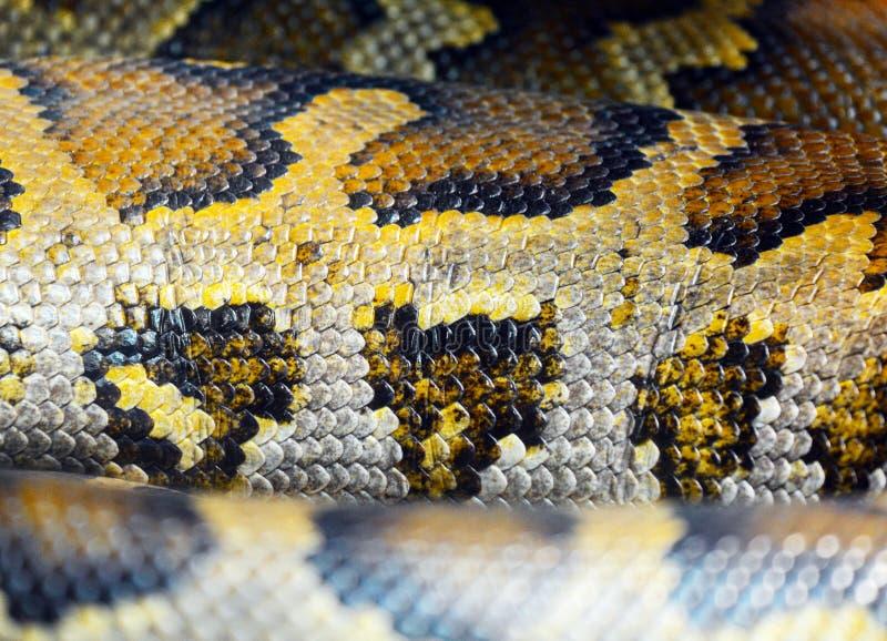 Burmese python skin royalty free stock images