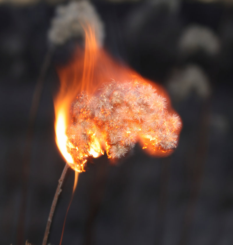 Burn dead plant. At the forest (close-up stock photos
