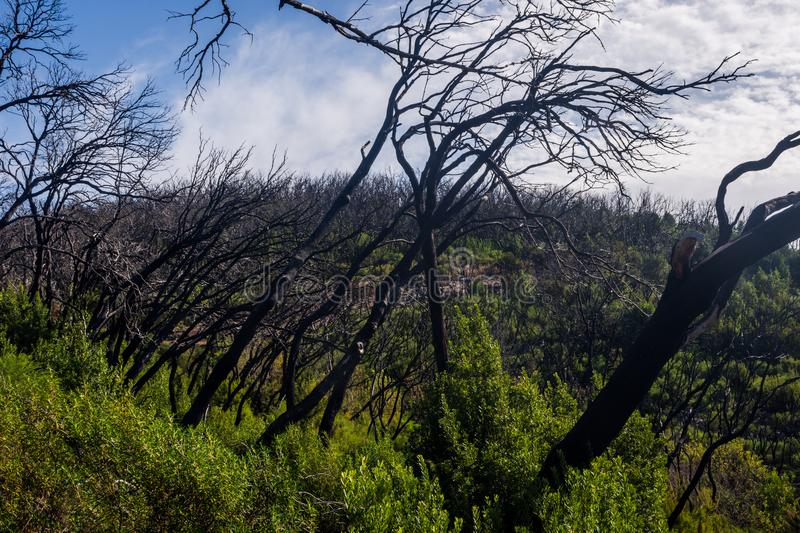 Burn down forest, La Gomera royalty free stock photography