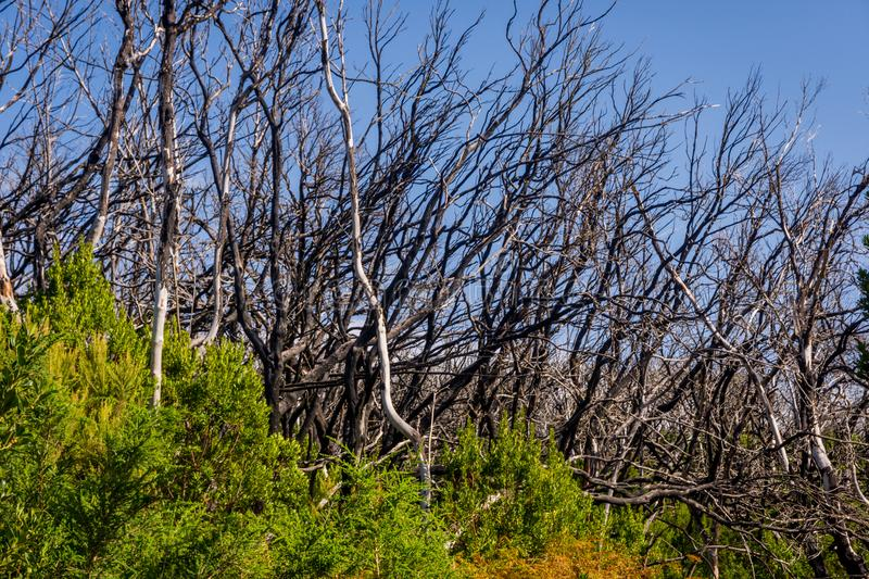 Burn down forest, La Gomera royalty free stock images