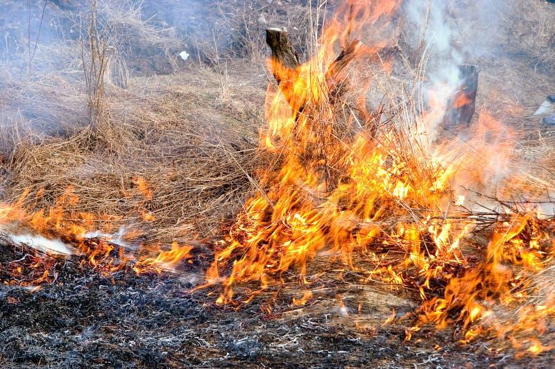 Burn off dry grass