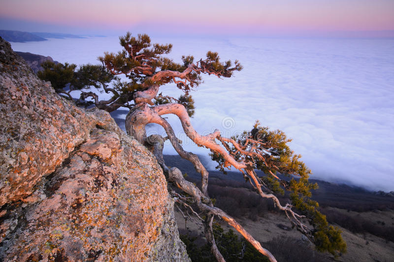 Burn out in the last rays of the sun. Mountain pine in the background is Demerdji in the Crimea stock photography