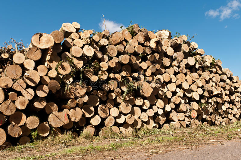 Download Burn pile stock photo. Image of circle, forest, environment - 26523974