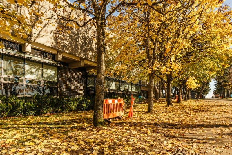 BURNABY KANADA - NOVEMBER 17, 2019: hyreshusar och gatasikt p? solig h?stdag i British Columbia royaltyfri fotografi