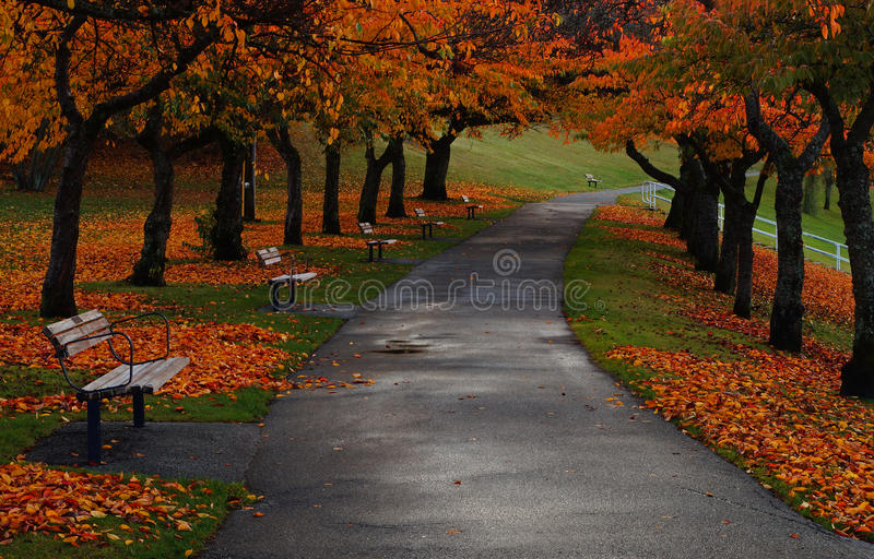 Burnaby Mountain fall colours royalty free stock photo
