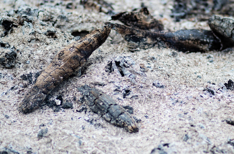 Burned ashes royalty free stock image