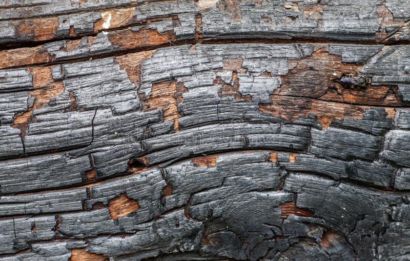 Burned black wood abstract texture, macro shot stock images