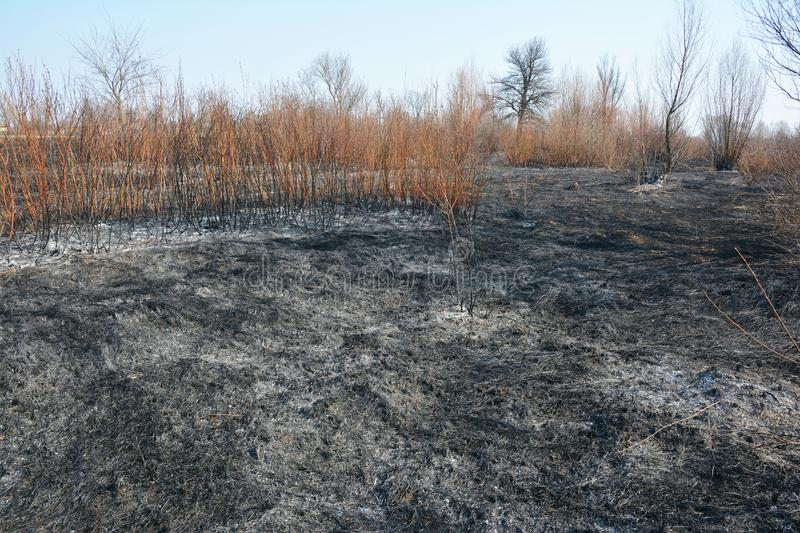 Burned dry grass with bushes and trees stock photos