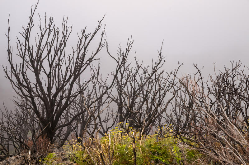 Burned forest in the mist royalty free stock photos