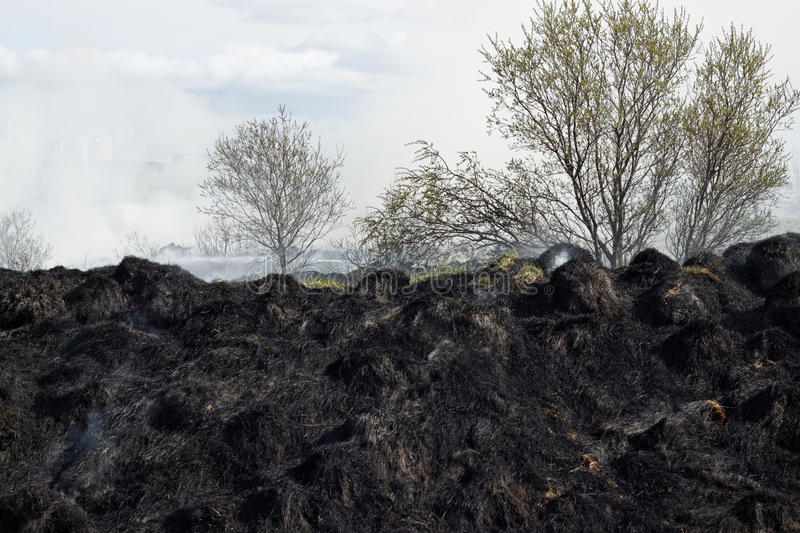 Download Burned grass residues stock image. Image of horizontal - 25822595