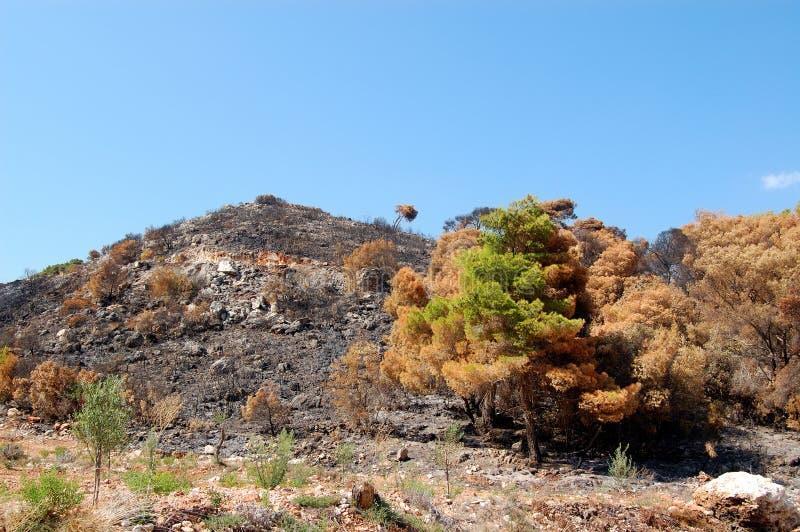 Download Burned hilltop stock photo. Image of greece, burned, ecology - 7104380