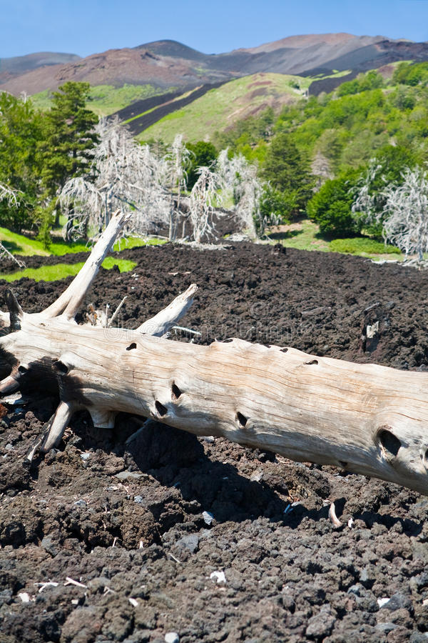 Download Burned Tree In Lava Flow On Green Slope Of Etna Stock Photography - Image: 20808912