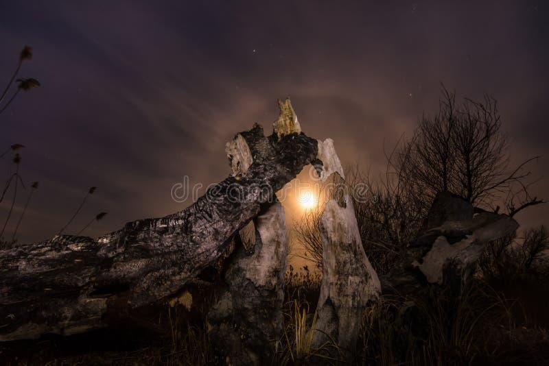 Burned tree - night full moon landscape stock image