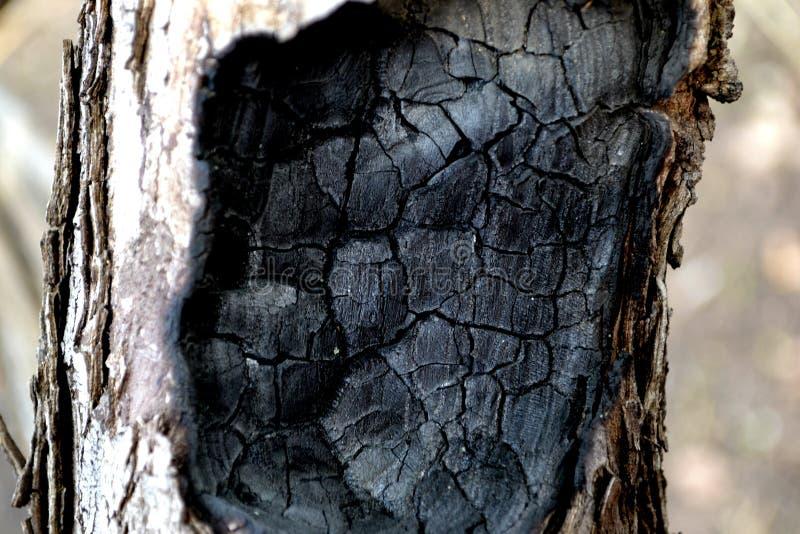 Burned tree royalty free stock photos