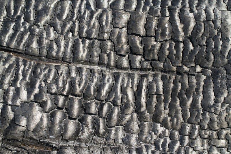 Burned wood stock image