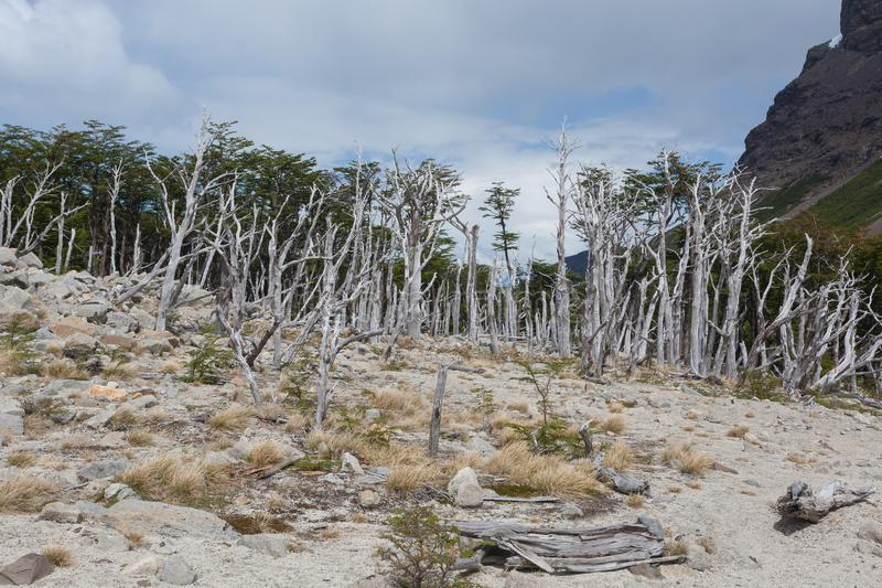 Burned woodland, French Valley, Torres del Paine, Chile royalty free stock photos