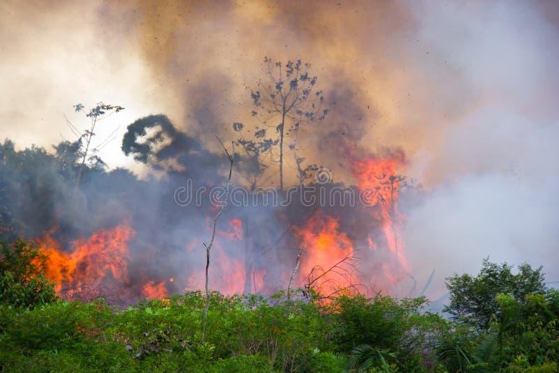 Burning brasileiro das Amazonas imagem de stock