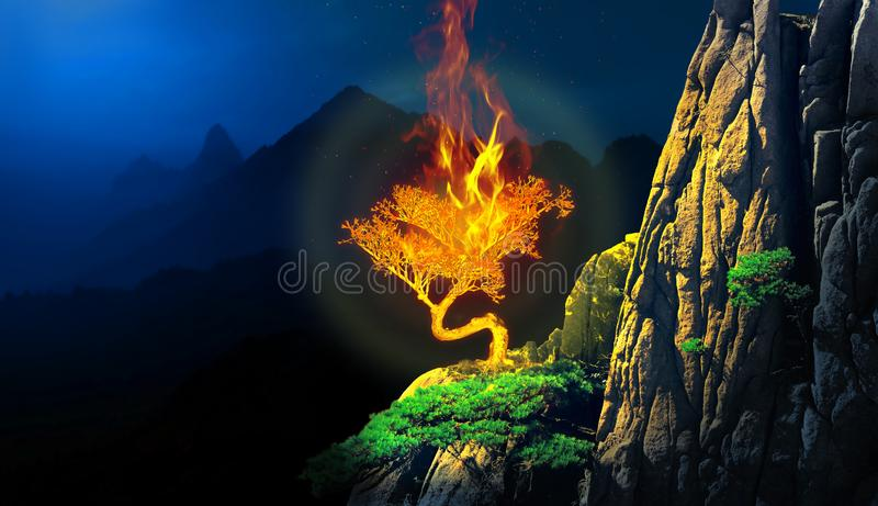 Burning bush plant in a cliff of a mountain stock image
