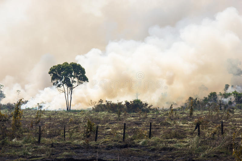 Burning d'Amazonie de Brésilien images libres de droits