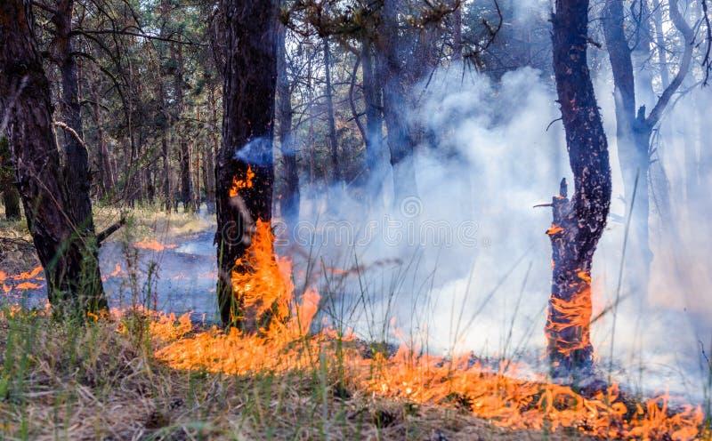 Burning d'incendie de forêt, le feu de forêt étroit au temps de jour images stock