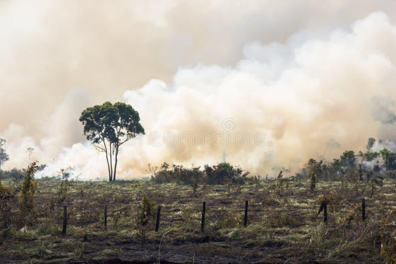 Burning de Amazónia do brasileiro imagens de stock royalty free