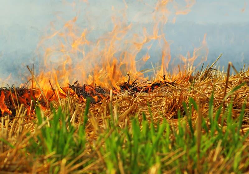 Burning de collecte de blé image libre de droits