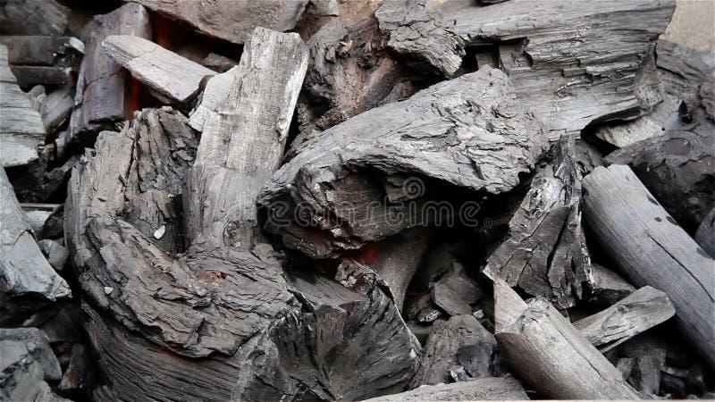 Burning del carbone di legna video d archivio