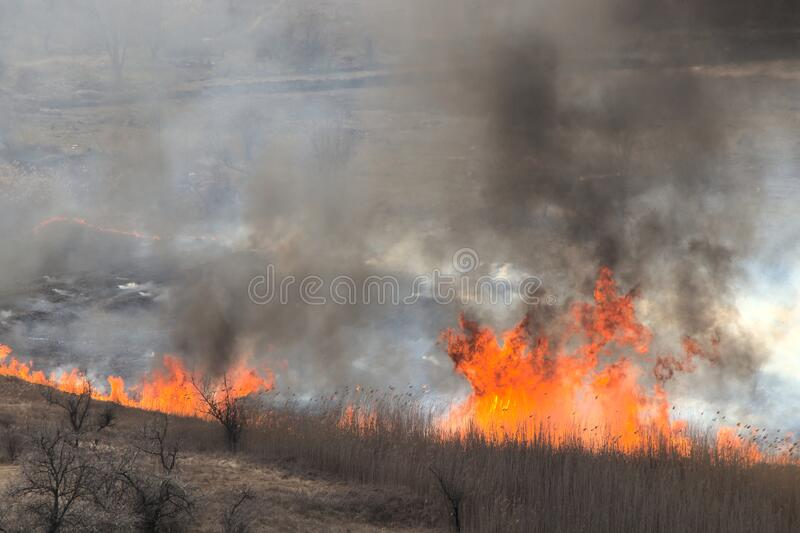 Burning dry grass in the open air. A flaming meadow with trees in the countryside. Black white balls of smoke from the fire stock photography